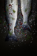 Raw seabass tails with coarse salt, red peppercorn and fresh dill, on black background, top view shot.