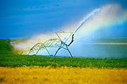 Irrigating a crop with rainbow<br />Monarch<br />Alberta<br />Canada
