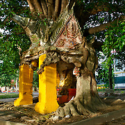 A buddhist shrine at Wat Muang in Ratchaburi, Thailand. The shrine has been grown into by a local fig tree that is slowly taking over the structure of the shrine