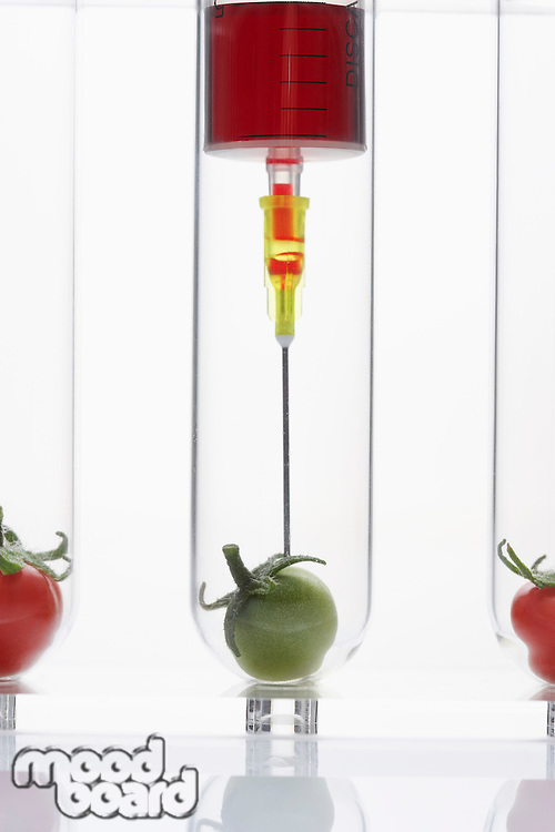 Syringe injecting green tomato in test tube