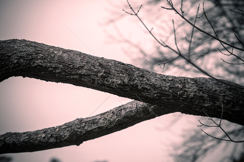 detail of a tree branch