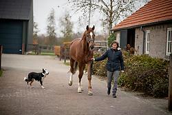 Van Gisbergen isabel, Ice Man, NED<br /> Fokkerij Isabel en Wil van Gisbergen<br /> © Hippo Foto - Dirk Caremans<br /> 20/11/2018