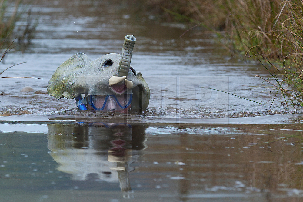 © Licensed to London News Pictures. 27/08/2017. Llanwrtyd Wells, Powys, Wales, UK. Sam Bradley from Cape Town South Africa does the bog wearing and elephant mask. The 32nd annual World Bog Snorkelling Championships, conceived over 30 years ago in a Welsh pub by landlord Gordon Green, are held at the Waen Rhydd Bog. Using unconventional swimming strokes, participants swim two lengths of a 55 metre trench cut through a peat bog wearing snorkel mask and flippers. Photo credit: Graham M. Lawrence/LNP