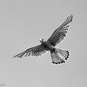 Center for Birds of Pray, South Carolina