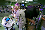 Vienna, Austria. Veterinärmedizinische Universität Wien (Vetmeduni Vienna).<br /> Reproductive ultrasonography at the Department/Clinic for Companion Animals and Horses (Department/Universitätsklinik für Nutztiere und öffentliches Gesundheitswesen in der Veterinärmedizin).<br /> FREE ONLY FOR VETMEDUNI INTERNAL USE - ALL OTHERS MUST ACQUIRE PUBLICATION RIGHTS FROM HEIMO AGA!