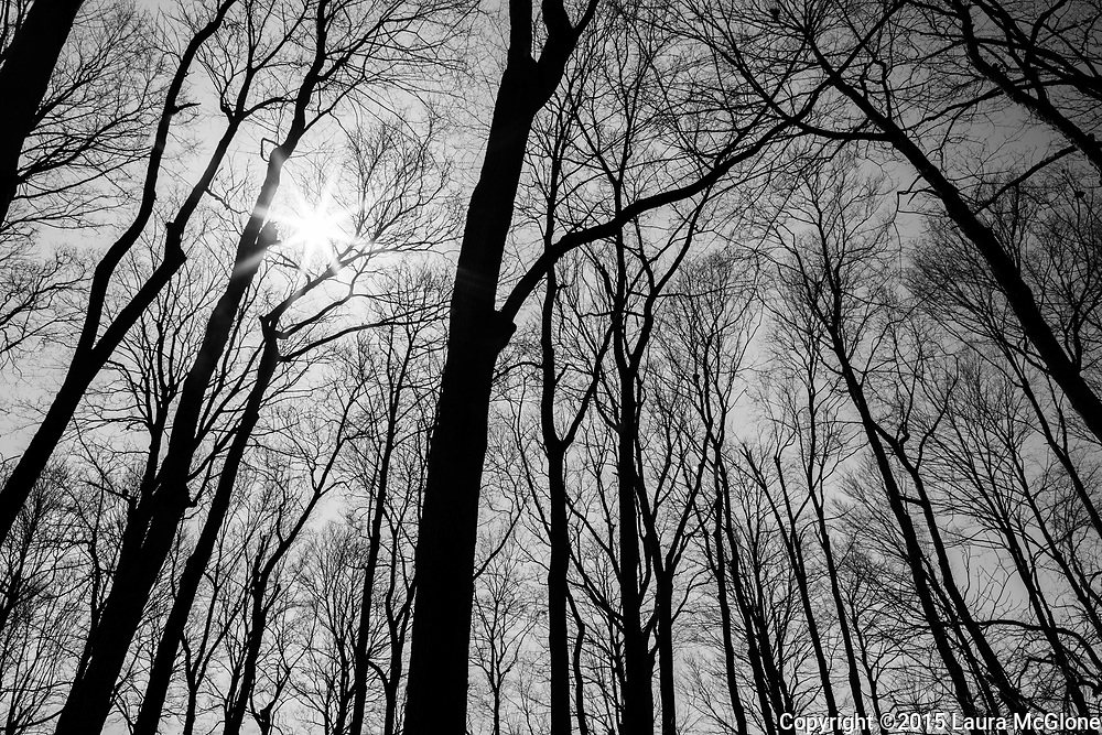 Trees in Silhouette in black and white with star sun