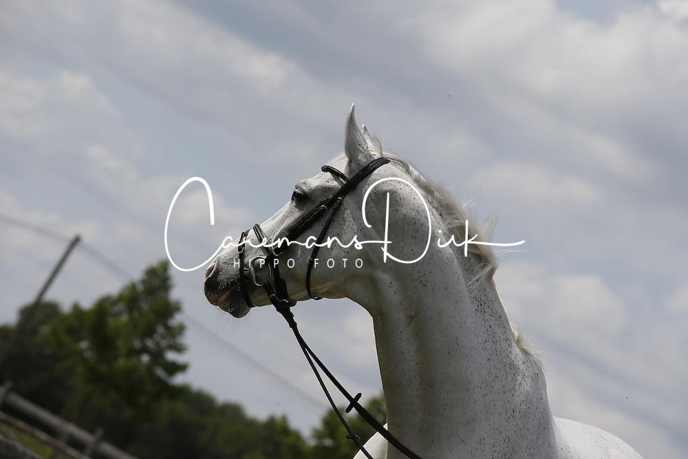 Deusser Daniel (GER) - Cornet d'Amour<br /> Stephex Stables - Wolvertem 2014<br /> &copy; Dirk Caremans