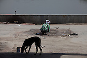 A boy is preparing the ground for a new body to be cremated at the traditional 'burning ghat' in Agra, while a dog is walking by. Reduced into ashes it will then be partly thrown into the heavily polluted Yamuna River, flowing next to the Taj Mahal.