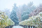 Abeja snow fall scene 11-6-17