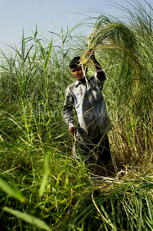 9th May 2014, Yamuna River, New Delhi, India. A handler cuts elephant fodder on an island in the Yamuna River, New Delhi, India on the 9th May 2014<br />