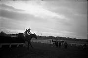 "16/01/1963<br /> 01/16/1963<br /> 16 January 1963<br /> Leopardstown Races at Leopardstown Race track, Dublin. Mrs J.J. Burns' ""Out and About"" (ridden by C. Kinnane) clearing the last jump in front of the field to win the Glencullen Handicap Chase at Leopardstown."