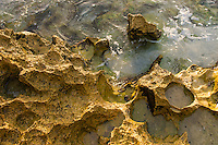 Weathered sandstone on the coastline, De Hoop Nature Reserve and marine protected area, Western Cape, South Africa