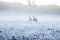 2016-11-19 Early morning frost in the New Forest, Hampshire.