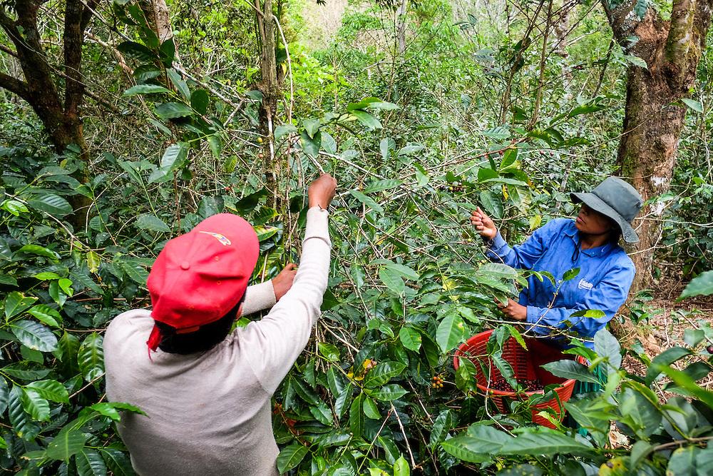 FST, Volcan, Chiriqui - Panama 04-03-2016<br /> Photography &copy; Aaron Sosa