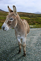 Animals, donkey.<br />
