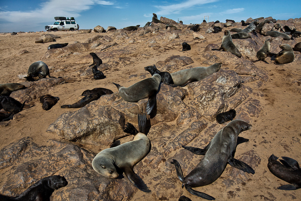 Seals sit on the rocks at the Cape Cross Seal Colony, the world's largest breeding colony of Cape fur seals.