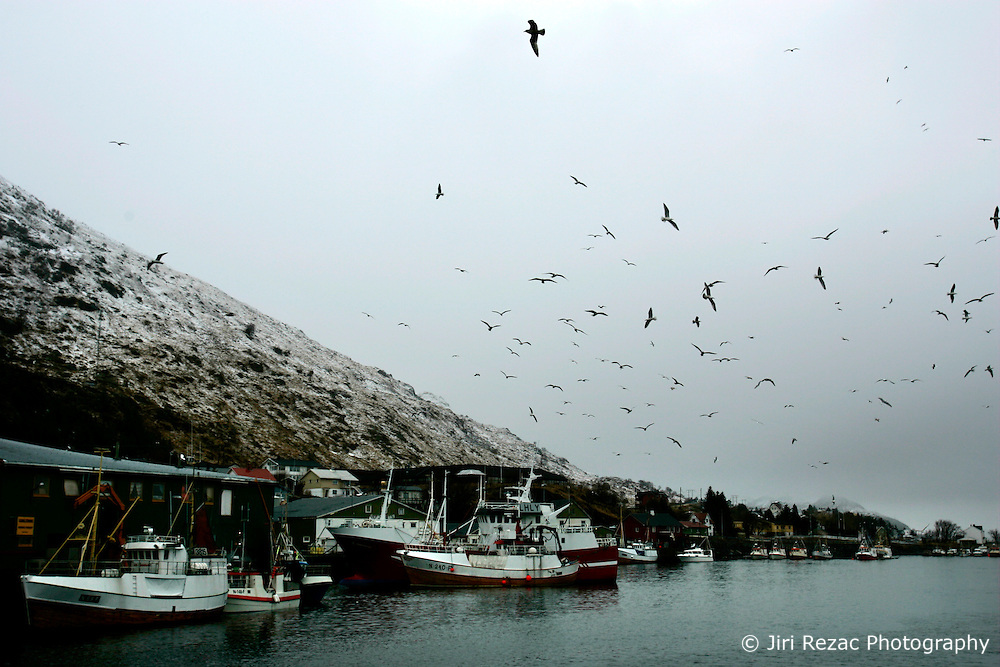NORWAY LOFOTEN 29MAR07 - Fishing boats and seagulls in Napp on the Lofoten islands...jre/Photo by Jiri Rezac..© Jiri Rezac 2007..Contact: +44 (0) 7050 110 417.Mobile:  +44 (0) 7801 337 683.Office:  +44 (0) 20 8968 9635..Email:   jiri@jirirezac.com.Web:    www.jirirezac.com..© All images Jiri Rezac 2007 - All rights reserved.