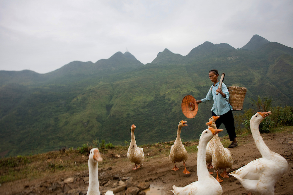 Lu Deqing walks past a gaggle of geese toward her field to begin the peanut harvest. Her husband Wei was hit by a car several years ago and was in a coma for 15 days. The accident has made him afraid of heavy labor. Since her sons have moved to the city to find jobs, 58-year-old Lu is left shouldering the bulk of the backbreaking farm work.