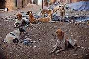 Stray dogs are waiting inside one of the water-affected colonies in Bhopal, Madhya Pradesh, India, near the abandoned Union Carbide (now DOW Chemical) industrial complex.