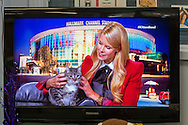 Wantagh, New York, USA. 7th February 2016. Host BETH STERN is holding tabby cat ALEXANDER, the Mayor of Last Hope Rescue, to tell the audience he is available for adoption, during Hallmark Channel Kitten Bowl III. Last Hope Animal Rescue has an Open House where the adoption center's volunteers and visitors watch the game on TV and cheer on their team, the Last Hope Lions. Over 100 adoptable kittens from Last Hope Inc and North Shore Animal League America participated in the taped games, and the Home and Family Felines won the 2016 championship, which first aired the day of Super Bowl 50.