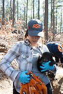 Bear Habitat research for an Oklahoma State University graduate student