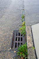 A wet street during a rain storm with water flowing into a storm drain.