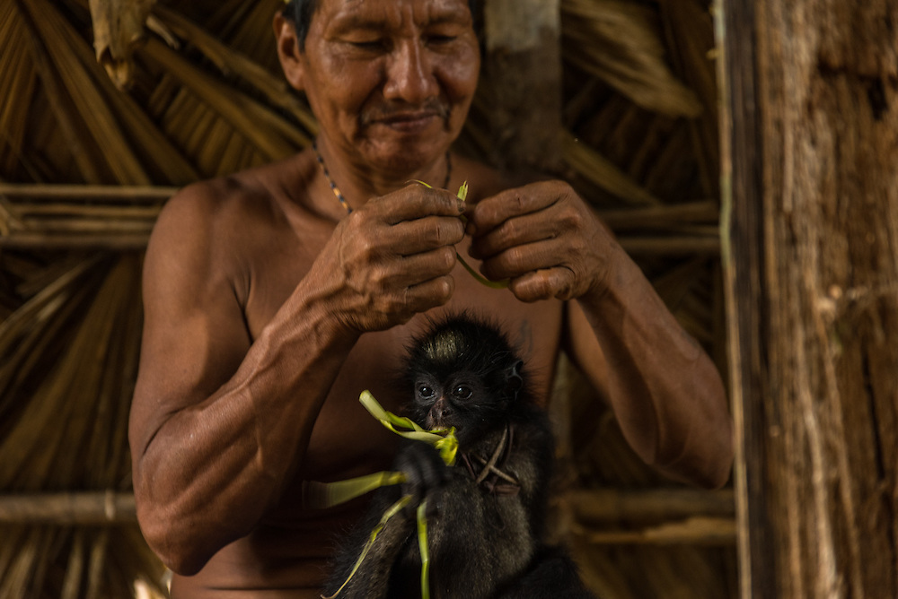 A man from the Huaorani tribe plays with his pet Spidermonkey. They killed his mother while hunting and raise him until he is adult. Then if it wishes, it can leave into the jungle again, Yasuni Reserve, Ecuador.