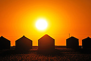 Grain bins at sunrise<br /> near Moose Jaw<br /> Saskatchewan<br /> Canada