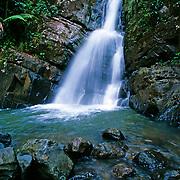El Yunque national park.Puerto Rico