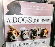2019, June 12. UPI, Amsterdam, the Netherlands. at the dutch premiere of A Dog's Journey.