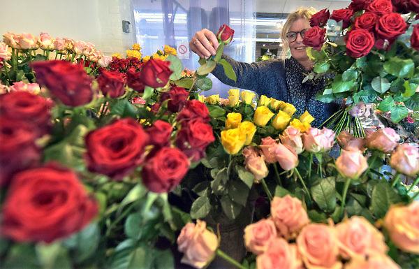 Nederland, NIjmegen, 13-2-2018 Valentijnsdag . Bij bloemist Krayenhoff extra aandacht voor veel en mooie rozen. Foto: Flip Franssen
