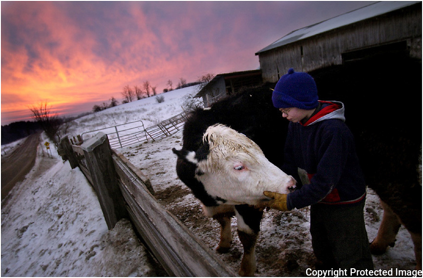 "As the sun rises early Friday morning, John Frost, 10,  and 1-year-old steer, Jerimiah, spend some quality time together at R Frost Dairy Farm in Paris.  ""I like being with the cows, to see how they think, they move, and what they do,"" said Frost of his time growing up on a dairy farm.  The youngest of his siblings, John owns 4 cows, that he proudly shows in 4H competitions..."