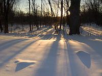 Sunset Shadows, Minute Man National Historical Park, Lexington, Massachusetts