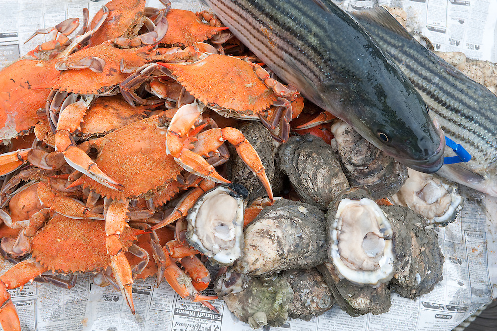 Crabs, oysters, and rockfish on the eastern shore