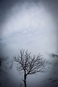 A bare tree La Mongie, ski resort, in a thick fog.