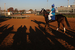 Photographers and horse enthusiasts line the rail near the dirt track to watch Breeder's Cup hopefuls during morning workouts at Churchill Downs in Louisville Wednesday, Nov. 02, 2011. Photo by Jonathan Palmer