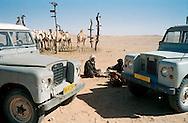 Febbraio 2012.The Saharawi refugee camp .Pastori con i cammeli che portano in transumanza.
