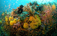 Rainbow Canyon.soft corals meadow.Puerto Galera