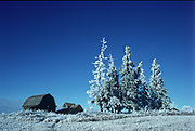 Old barn and hoarfrost covered spruce trees<br />