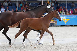 025 - Fadessa <br /> KWPN Paardendagen Ermelo 2010<br /> © Dirk Caremans