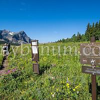 hikers hiking cut bank creek trail glacier national park