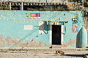 A street dog walks past a blue painted wall decaying under the desert sun in the ghost town of Mineral de Pozos, Guanajuato, Mexico. The town, once a major silver mining center was abandoned and left to ruin but has slowly comeback to life as a bohemian arts community.