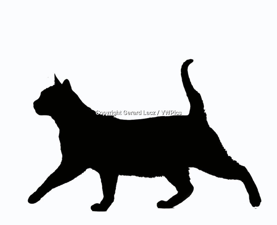 Zibeline Burmese Domestic Cat, Silhouette of Adult against White Background