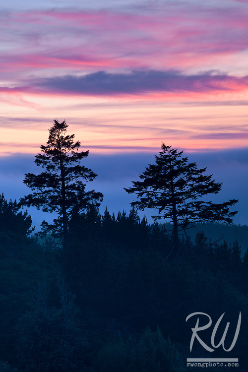 Pair of Trees and Foggy Sunset, Point Reyes National Seashore, California