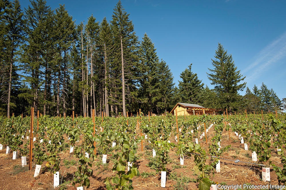 Scott, Martha, & Pierre Wright of Scott Paul Wines, in their Azana Vineyard, Chehalem-Yamhill AVA, Willamette Valley, Oregon