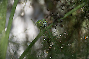 Photo caterpillar and rain drops, matted print, wall art, macro, close up. California nature, garden, photography. Santa Monica, Westside, Venice, Los Angeles, Fine art photography limited edition.