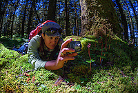 Photographing a heart-leaved Twayblade orchid in spruce forest of Kodiak, Alaska with a point and shoot camera