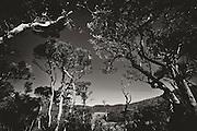 Black & White photographs from Sri Lanka<br /> Horton Plains NP.