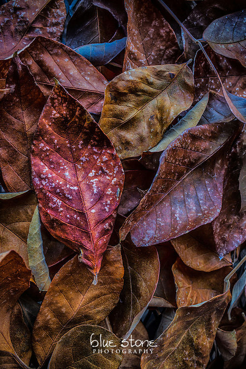 Autumn leaves with a palette of rich colors including red, burgundy, gold and orange.<br />