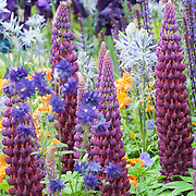 Chelsea Flower Show Garden 2015